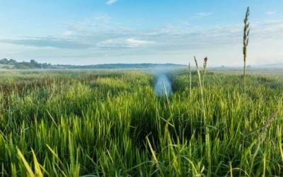 L'EAU dans le Calvados : un patrimoine précieux, un enjeu majeur