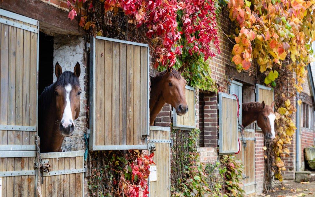 Le Département du Calvados soutient  le monde du cheval et la filière équine