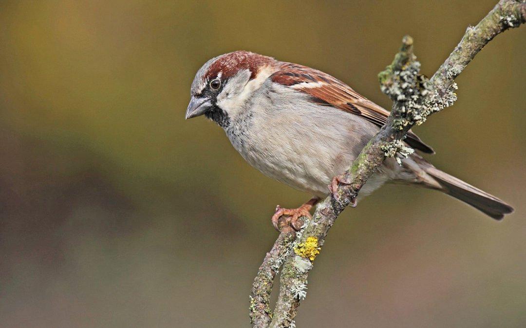 Et si on s'occupait des oiseaux du jardin ?