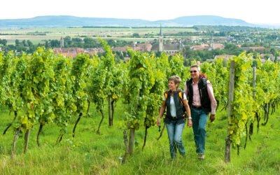 Les vendanges, une belle saison pour la Basse-Franconie